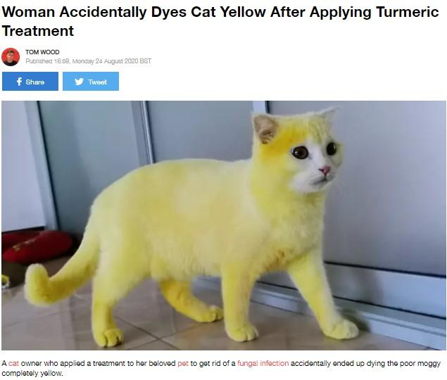 全身が真っ黄色になってしまった猫(画像は『LADbible 2020年8月26日付「Woman Accidentally Dyes Cat Yellow After Applying Turmeric Treatment」(Credit: Facebook)』のスクリーンショット)
