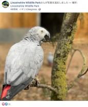 【海外発!Breaking News】来園客を「失せろ!」と罵倒する動物公園の大型インコ、裏に隔離される(英)