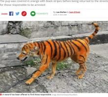 【海外発!Breaking News】トラのように染められた犬に「これは虐待」怒りの声が殺到(マレーシア)