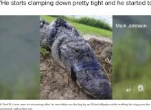 【海外発!Breaking News】巨大ワニに襲われた61歳男性、人差し指で目を突いて撃退!「生き抜くことだけ考えた」(米)