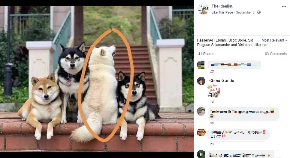 集合写真で背中を向けるお茶目な柴犬(画像は『The Idealist 2020年9月8日付Facebook」』のスクリーンショット)