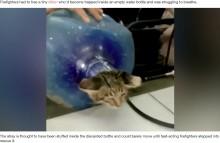 【海外発!Breaking News】大容量の水のボトルにはまった子猫 消防隊員に救出される(インドネシア)<動画あり>