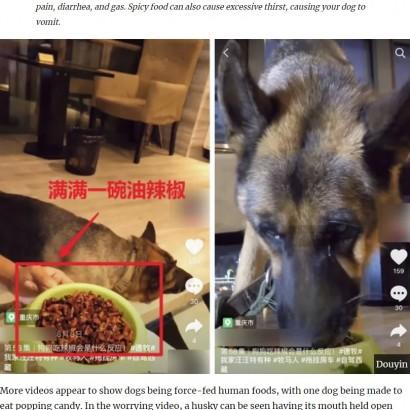 【海外発!Breaking News】犬に無理やり唐辛子や弾けるキャンディーを与える「食べる放送」が物議(中国)