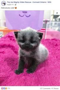 可愛いジャニー(画像は『Tiny but Mighty Kitten Rescue - Cornwall Ontario / SDG 2020年8月15日付Facebook「Ridiculously cute!」』のスクリーンショット)