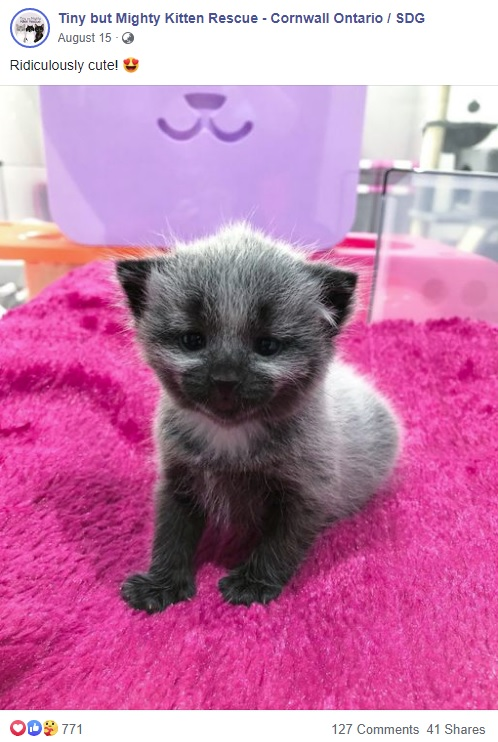 可愛いジャニー(画像は『Tiny but Mighty Kitten Rescue - Cornwall Ontario / SDG 2020年8月15日付Facebook「Ridiculously cute!」』のスクリーンショット)