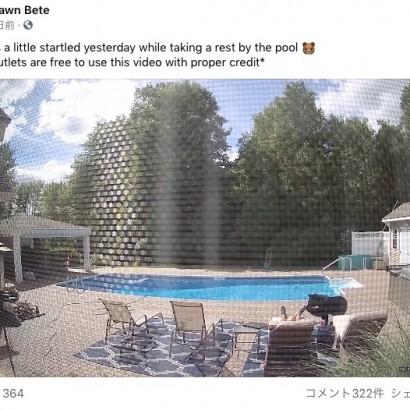 【海外発!Breaking News】プールサイドで昼寝中の男性、クマに足を撫でられて目が覚める(米)<動画あり>