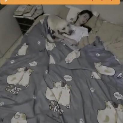 【海外発!Breaking News】飼い主が熟睡中、布団を掛けてあげるラブラドール・レトリバー<動画あり>