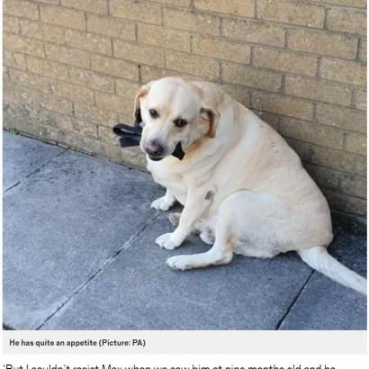 【海外発!Breaking News】自分のリードを飲み込んでしまった犬、すべて吐き出し無事回復(英)