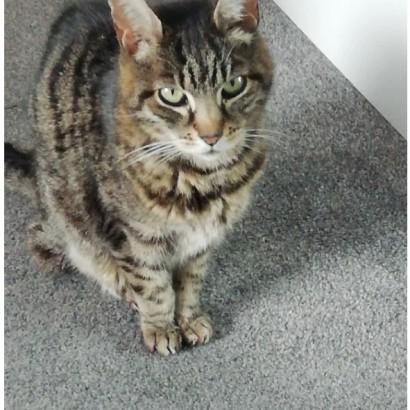 【海外発!Breaking News】コンテナ内に2か月閉じ込められた猫が生還 クモと結露で生き延びたか(英)<動画あり>