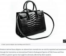 【海外発!Breaking News】フランス旅行で200万円超のワニ革バッグを購入した女性、オーストラリアに帰国も税関が押収