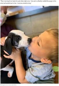 """新しい家族""""レイシー""""にキスするベントレー君(画像は『Washington Post 2020年9月10日付「A puppy with a cleft lip is adopted by a boy with a cleft lip: 'They instantly loved each other'」(Lydia Sattler)』のスクリーンショット)"""