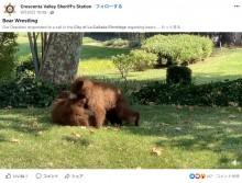「クマが出た」駆けつけた保安官、夢中で遊ぶ子グマの姿に立ち去るまでそっと見守る(米)<動画あり>