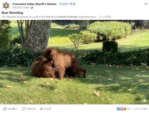 【海外発!Breaking News】「クマが出た」駆けつけた保安官、夢中で遊ぶ子グマの姿に立ち去るまでそっと見守る(米)<動画あり>