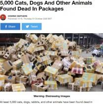 【海外発!Breaking News】5000匹を超える犬や猫などが梱包されたまま放置される 命があったのはわずか250匹(中国)
