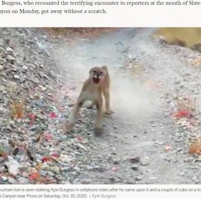 【海外発!Breaking News】恐怖の6分間! ピューマに追われながら動画を撮り続けた男性「もっとも怖い野生のピューマのビデオ」(米)<動画あり>