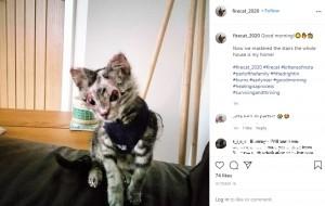 かなり回復してきたファイヤー・キャット(画像は『firecat_2020 2020年10月16日付Instagram「Good morning!」』のスクリーンショット)