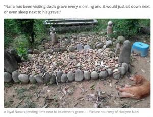 【海外発!Breaking News】飼い主が亡くなってから2年間、毎日お墓参りする猫(マレーシア)
