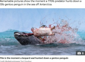 ペンギンの頭を引きちぎるヒョウアザラシ(画像は『The Sun 2020年10月15日付「RAW NATURE Penguin brutally beheaded in a bloody attack by a leopard seal in incredible nature pictures」(Credit: Mediadrumimages/ Yuri Choufour)』のスクリーンショット)