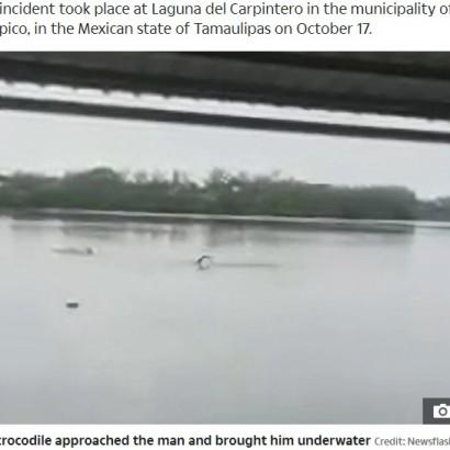 【海外発!Breaking News】遊泳禁止の湖で泳いでいた男性、ワニに頭を噛みつかれる(メキシコ)<動画あり>