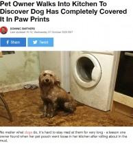 【海外発!Breaking News】帰宅した飼い主、キッチンを埋め尽くす泥と愛犬の足跡に「なんてことなの!」(英)