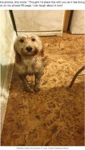飼い主を愛おしそうに見上げる愛犬(画像は『LADbible 2020年10月7日付「Pet Owner Walks Into Kitchen To Discover Dog Has Completely Covered It In Paw Prints」(Credit: Deadline News)』のスクリーンショット)
