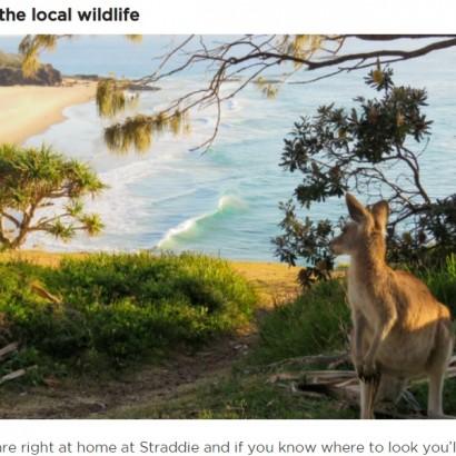 【海外発!Breaking News】カンガルーとコアラが一触即発! オーストラリアの離島で驚きの光景<動画あり>