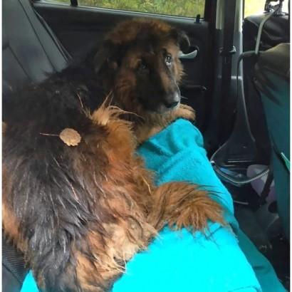 【海外発!Breaking News】飼い主に薬を注射されて埋められた犬、自力で這い出し助けを求める(露)