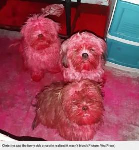 身体中がピンク色に染まった3匹(画像は『Metro 2020年10月3日付「Naughty puppies that got into owner's makeup bag turned totally pink」(Picture: ViralPress)』のスクリーンショット)