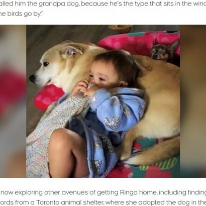 【海外発!Breaking News】「ピットブルの混血」と疑われた犬、市による安楽死を免れ無事飼い主の元へ(カナダ)