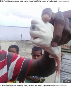 母ザメのお腹の中から発見された赤ちゃん(画像は『The sun 2020年10月15日付「JAWS DROPPING Mutant one-eyed 'cyclops' baby shark cut from mother's womb by stunned fishermen in Indonesia」(Credit: ViralPress)』のスクリーンショット)