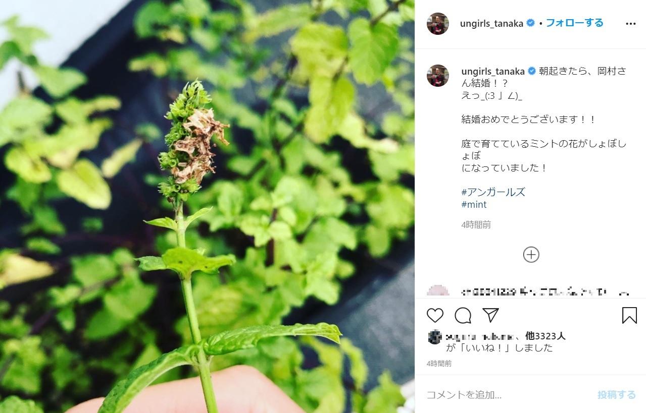 「庭で育てているミントの花がしょぼしょぼに…」とアンガ田中(画像は『アンガールズ田中卓志 2020年10月23日付Instagram「朝起きたら、岡村さん結婚!?」』のスクリーンショット)