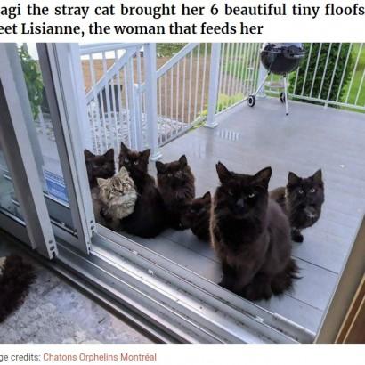【海外発!Breaking News】世話をしていた野良猫、6匹の我が子を窓の外に並べてお披露目にやってくる(カナダ)