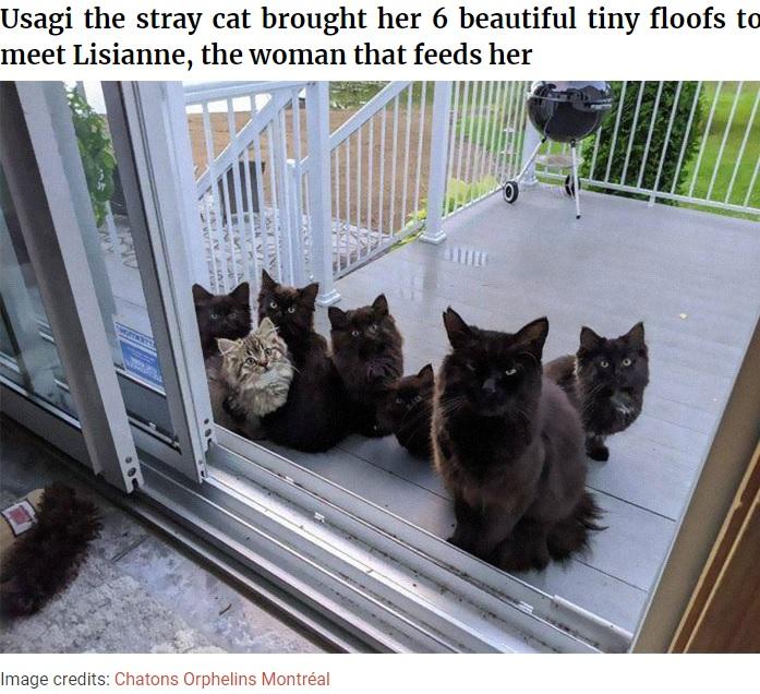 窓の外に並ぶ子猫と母猫(画像は『Bored Panda 2020年11月16日付「Stray Cat Brings All Her Babies To A Woman Who Gave Her Food And Helped Her」(Image credits: Chatons Orphelins Montréal)』のスクリーンショット)