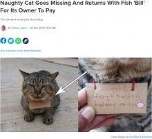 """「あなたの猫に魚を3匹あげました」3日間行方不明だった猫が""""借金""""を抱えて帰宅(タイ)"""