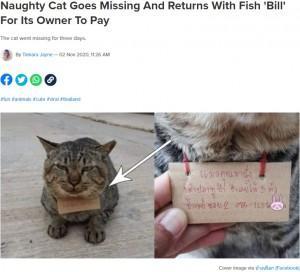 """【海外発!Breaking News】「あなたの猫に魚を3匹あげました」3日間行方不明だった猫が""""借金""""を抱えて帰宅(タイ)"""