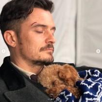 【イタすぎるセレブ達】オーランド・ブルーム、愛犬の死から4か月 保護犬を家族として迎え入れる