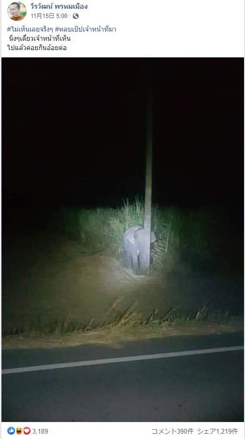 """""""隠れたつもり""""の子ゾウ(画像は『วีรวัฒน์ พรหมเมือง 2020年11月15日付Facebook「#ไม่เห็นเลยจริงๆ #หลบเป้ปเจ้าหน้าที่มา」』のスクリーンショット)"""