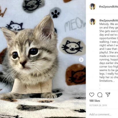 【海外発!Breaking News】前足が広がって歩けなかった子ネコ 周囲の愛情と必死の治療で走ることが可能に(米)<動画あり>