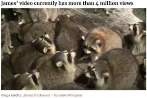 餌を待つアライグマ達(画像は『Bored Panda 2020年11月12日付「Every Night, This Man Feeds Hot Dogs To This Pack Of Raccoons As Per His Late Wife's Wish」(Image credits: James Blackwood - Raccoon Whisperer)』のスクリーンショット)