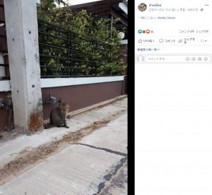 帰ってきたチェンさんの猫(画像は『ช้างเผือก 2020年10月27日付Facebook「หายไป 3วัน กลับมาพร้อมกับหนี้สิน」』のスクリーンショット)