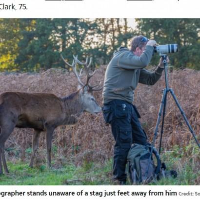 【海外発!Breaking News】鹿を狙うカメラマンの真後ろに鹿が出現 本人は全く気が付かず「後ろ! 後ろ!」状態に(英)