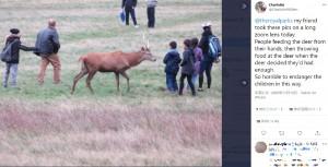 子供達も至近距離で鹿と接している(画像は『Charlotte 2020年11月16日付Twitter「@theroyalparks my friend took these pics on a long zoom lens today.」』のスクリーンショット)