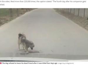 【海外発!Breaking News】車にはねられた仲間の事故現場で身体を擦り付ける犬が涙を誘う(中国)