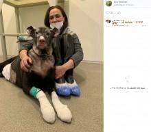 【海外発!Breaking News】妊娠中の犬、大火傷を負いながらも火事を知らせホスピスの4人を救う(露)