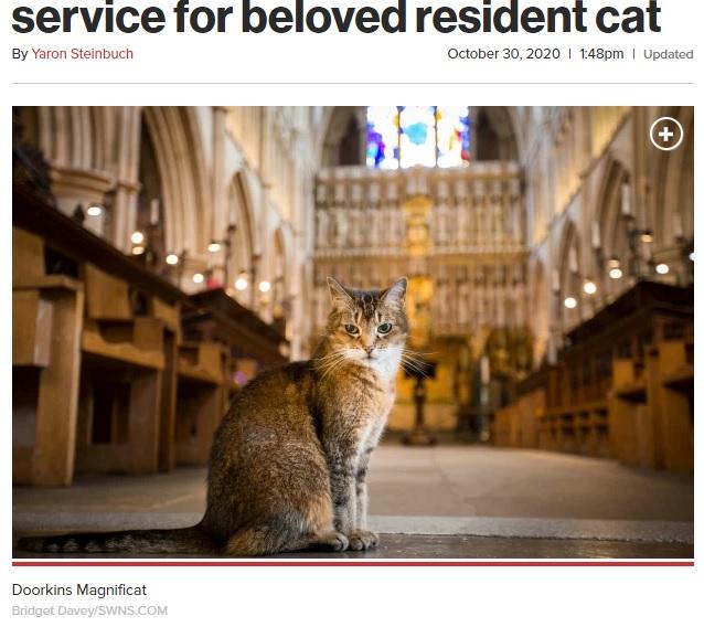 サザーク大聖堂で過ごし、人気者だった猫(画像は『New York Post 2020年10月30日付「London cathedral holds funeral service for beloved resident cat」(Bridget Davey/SWNS.COM)』のスクリーンショット)