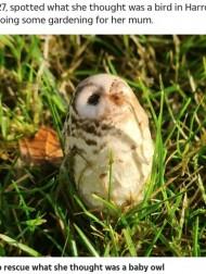 【海外発!Breaking News】フクロウのヒナを救おうとした女性、近づくとキノコと分かり驚く(英)