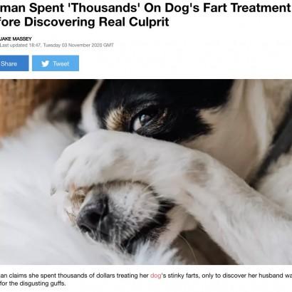 """【海外発!Breaking News】犬の""""オナラ治療""""に数十万円の治療費を支払った女性、臭いの犯人が夫と判明し大激怒"""