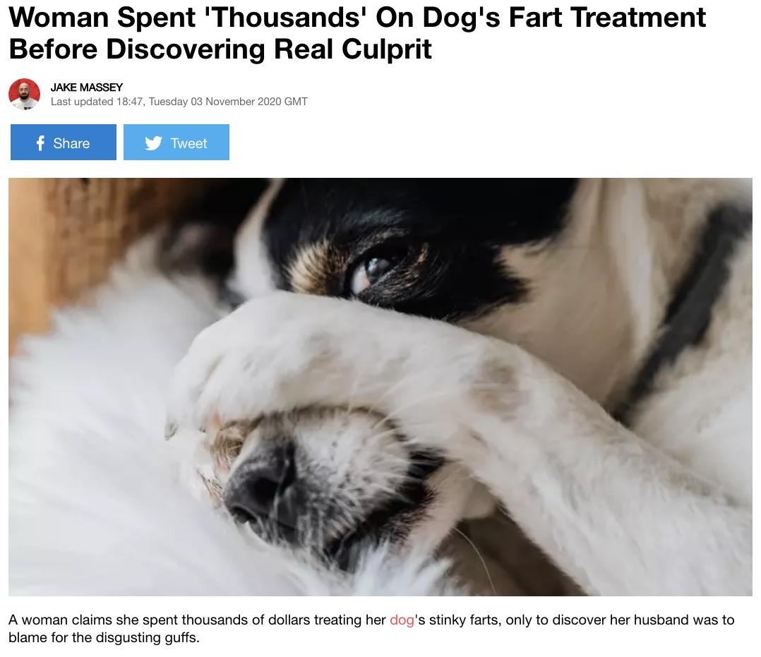 犬も何度も検査をさせられて大迷惑!?(画像は『LADbible 2020年11月3日付「Woman Spent 'Thousands' On Dog's Fart Treatment Before Discovering Real Culprit」』のスクリーンショット)