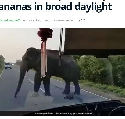 【海外発!Breaking News】バスを止めたゾウが車内のバナナを横取り 白昼堂々の犯行に唖然(スリランカ)<動画あり>