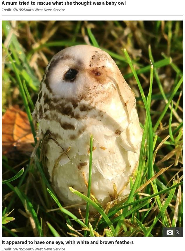 片目を閉じたフクロウのようなキノコ(画像は『The Sun 2020年11月20日付 「HOOT HAVE THOUGHT IT Mum who tried to rescue baby owl stunned after it turned out to be… a mushroom」(Credit: SWNS:South West News Service)』のスクリーンショット)